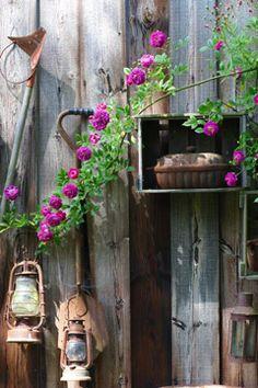 Nele Braas - Photography - Fotografie - garden