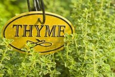 Thyme* Planet: Venus Element: Air Main magickal uses: clairvoyance, cleansing, consecration, courage, divination, dreams, exorcism, faeries, happiness, healing, love, money, prevents nightmares, protection, psychic development, purification Other magickal uses: compassion, confidence, contacting other planes, grieving, magic, meditation, Midsummer, passion, release, renewal, rituals for the dead, Summer rituals, wishing  - Pinned by The Mystic's Emporium on Etsy