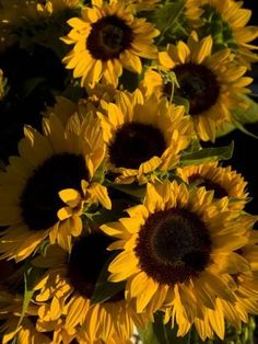 Photographic Print: Bunch of Sunflowers are on Display at a Local Farmer's Market by Ralph Lee Hopkins : 16x12in