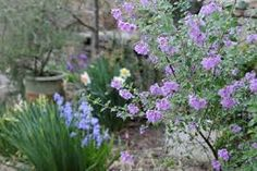 Image result for flowers available in october australia