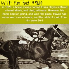 WTF Fun Facts is updated daily with interesting & funny random facts. We post about health, celebs/people, places, animals, history information and much more. New facts all day - every day! Funny Weird Facts, Bizarre Facts, Wtf Fun Facts, Strange Facts, Crazy Facts, Random Facts, Celebrity Blogs, Horse Facts, Weird Stories
