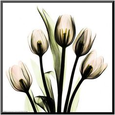 Art.com Tulip Bouquet Framed Wall Art ($95) ❤ liked on Polyvore featuring home, home decor, wall art, pink, framed wall art, pink wall art, pink home decor and vertical wall art