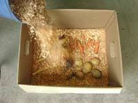 How to Store Root Crops