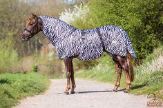 De QHP Eczeemdeken Zebra is een zeer comfortabele eczeemdeken. Met deze deken is uw paard optimaal beschermd tegen vliegen en muggen.Maten (85/135 + 95/145 + 105/155 + 115/165 + 125/175+ 135/185 + 145/195 + 155/205 + 165/215)Normaal €89,95 nu €64,95BESTELLEN:Bestellingen kunnen het beste geplaatst worden op onze nieuwe website www.limburgsruiterhuis.nlEn profiteer daar ook van onze laatste nieuwe acties!  https://www.facebook.com/limburgruiterhuis