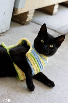 a cat. in a sweater.