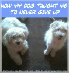 How My Dog Taught Me To Never Give Up #blog #dogs