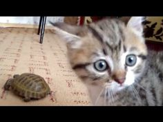 Fuzzy Little Kitten Notices Animal He's Never Seen Before…His Reaction Is Just PRICELESS. | The Meow Post