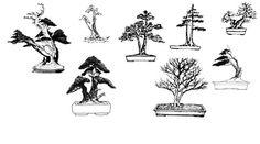 Bonsai Ficus, Decor, Art, Art Background, Decoration, Kunst, Performing Arts, Decorating, Deco
