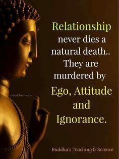 New quotes life buddha buddhism Ideas Buddhist Quotes, Spiritual Quotes, Positive Quotes, Buddhist Teachings, Buddha Quotes Inspirational, Motivational Quotes, Buddha Quotes Love, Wise Quotes, Great Quotes