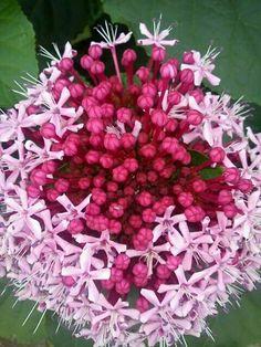 Flores Brasil