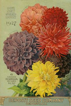 Deposit Seed Co ,  1927 catalogue back cover