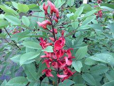 phormium tenax   jungle   Pinterest   Garden inspiration ...