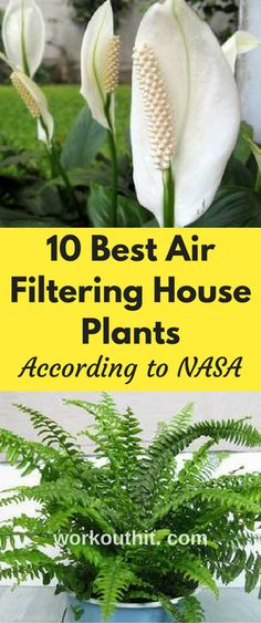 Using space station technology to ensure the safety of your home may be easier than you thought. The National Aeronautics and Space Administration conducted the NASA Clean Air Study to demonstrate the effectiveness of particular plants to purify air.