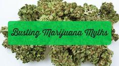 10 Marijuana Myths Busted Wide Open  LIWTS