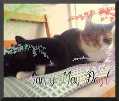 Symphonicats: 102. It's May Day, hooray! #cats #blogging #lifestyle