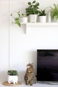 Efeutute | Büropflanzen | Pinterest Pflege Von Pflanzen Probleme Grunde