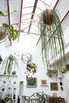 Houseplants hanging from the ceiling in Jamie's Jungle.