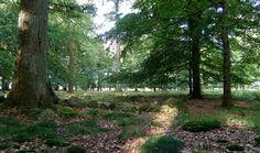 bilder stenar i trädgårdar - Sök på Google