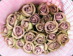 I have just found my favourite flower of all time - amnesia rose Taupe Wedding, Dusty Rose Wedding, Wedding Flowers, Pretty Flowers, Pretty In Pink, Amnesia Rose, Dusty Pink Weddings, Rose Bush, Antique Roses