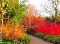 Sir Harold Hillier Gardens, Hants « Woolly Green