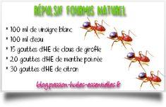 Vous cherchez des solutions naturelles pour vous débarrasser des fourmis ? Découvrez des huiles essentielles et des astuces pour les faire fuir !