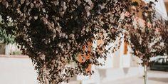 Ποια δέντρα είναι κατάλληλα για πεζοδρόμιο | Τα Μυστικά του Κήπου Christmas Wreaths, Holiday Decor, Home Decor, Decoration Home, Room Decor, Home Interior Design, Home Decoration, Interior Design