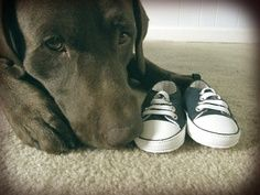 Trendy baby announcement ideas with pets ideas Maternity Pictures, Pregnancy Photos, Baby Pictures, Baby Pregnancy, Fun Baby Announcement, Pregnancy Announcements With Dogs, Foto Baby, Baby Time, Cool Baby Stuff