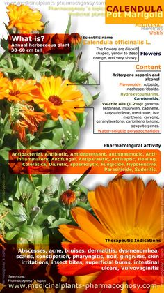 Calendula pot marigold health benefits.