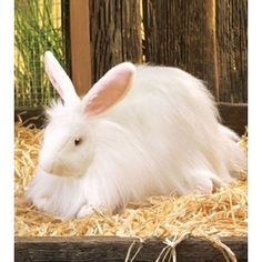A stuffed animal rabbit. It almost looks real.