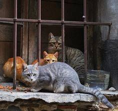 cats in old window