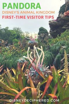 First Timer Tips for Pandora in Disney's Animal Kingdom - Disney Deciphered Planning a visit to Pandora - the World of Avatar? Tips for first timers to this land in Disney's Animal Kingdom park at Walt Disney World. Disney World Secrets, Disney World Tips And Tricks, Disney Tips, Disney Ideas, Disney Stuff, Disney Magic, Disney World Florida, Walt Disney World Vacations, Disney Parks