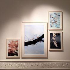 The opening of @yoshinori_mizutani 's exhibition was a success. Sakura can be seen until 8 May @ibasho___gallery #yoshinorimizutani #ibashogallery #japanesephotography #sakura #spring by ibasho___gallery