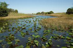 everglades | Daily Travel Photo – Everglades National Park, Florida