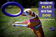 Interactive Play and Exercise with Your Dog Using PULLER | Pawsitively Pets