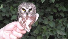 I Want An Owl Doorknob Now