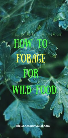 We hope this is one survival technique that you don't have to use, but it may just save your life. You can survive quite well for a good period of time if you know how to forage for food. Watch the video and learn how to do it: http://www.thegoodsurvivalist.com/how-to-forage-for-wild-food-or-the-fine-art-of-eating-weeds-for-survival/
