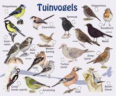 Animals Of The World, Animals And Pets, Beautiful Birds, Animals Beautiful, Sensory Garden, Bird Poster, Sea Fish, Fauna, Wild Birds