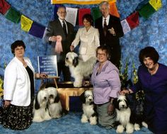 Our Moose has been the National Tibetan Terrier Stud Dog of the Year!