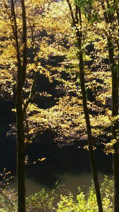 Été indien dans la vallée de l Ourche Vosges France