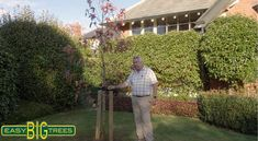 Check out our advice video on how to plant a tree Big Tree, Advice, Landscape, Check, Plants, Projects, Log Projects, Tips, Landscape Paintings