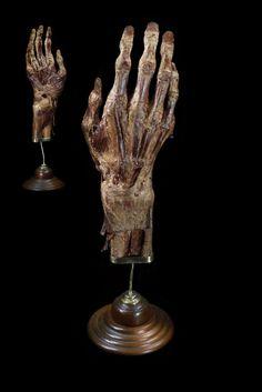 ✯ Mummified Human Hand .. Mounted by Ryan Matthew .. Photo by Sergio Royzen✯