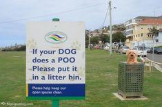 Dog's poo
