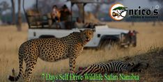 Share this tour with Friends & Family Camping Tours, Wildlife Safari, Self Driving, Campsite, Tourism, National Parks, Rest, Star, Lady