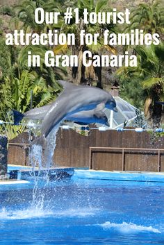 Palmitos park - Visit at least 10 different zoos. Part of our bucket list - from www.ourbucketlistlives.co.uk Great day out for families in Gran Canaria