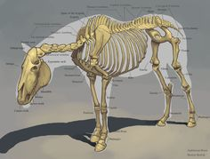 This impressive digital artwork depicts the skeletal structure of a horse with inspiring depth and splendid detail!
