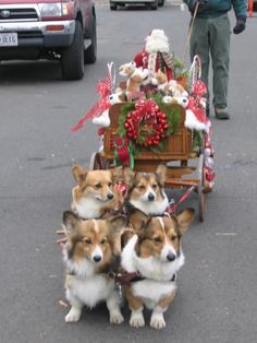 Reindeer subs pull santa's sleigh! #dogs #pets #Corgis Facebook.com/sodoggonefunny. @julia_ashley Best Dogs, All Dogs, I Love Dogs, Christmas Dog, Christmas Animals, Merry Christmas, Christmas Scenes, Christmas Holidays, Cute Puppies