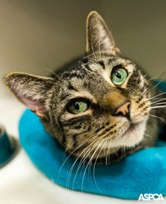 Alley is a friendly guy who's happiest when he's getting plenty of attention from his special people. Bring out his favorite toys and some yummy treats, and he's sure to keep you laughing for hours with his playful antics.