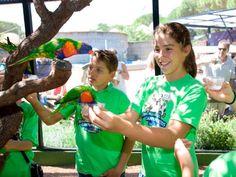 18 Ideas De Campamentos En El Zoo Aquarium De Madrid Casa De Campo De Madrid Zoo Campamento De Verano