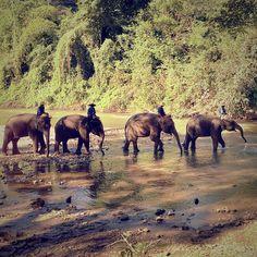 Elephants, Chiang Thailand, daar wil ik nog eens een keer een tocht op maken. Is al 10 jaar geleden!
