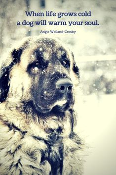 a dog in the snow with a winter quote.When life grows cold a dog will warm your soul. a dog in the snow with a winter quote.When life grows cold a dog will warm your soul. Best Dog Quotes, Cute Dog Quotes, Puppy Quotes, Baby Love Quotes, Animal Quotes, Pet Quotes, Snow Quotes, Winter Quotes, Dog Lady